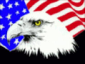 Bald eagle in front of US flag