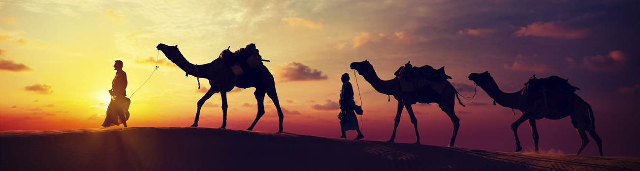 Two men and three camels walking in the desert at dusk